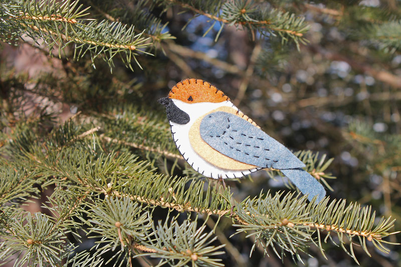 The Retiring Boreal Chickadee