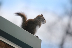 squirrel studing bird feeder
