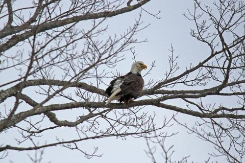 eagle-210