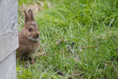 bunny-028