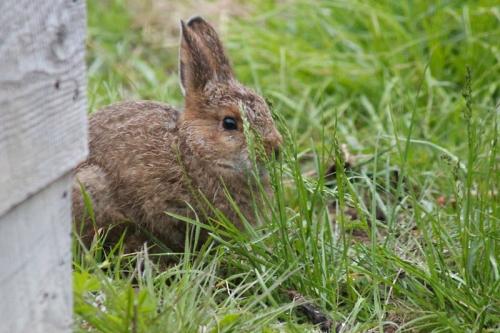 bunny-036