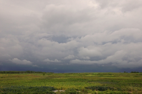 thunder clouds over blueberry barrens