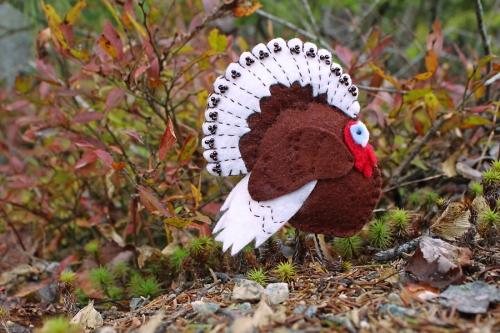 dtf-turkey