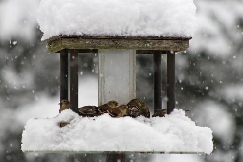 snow-day-423