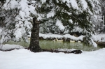 snow-day-453