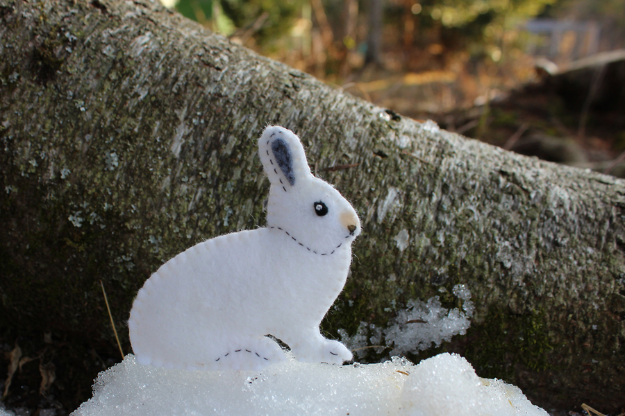 snowshoe hare The smallest species of the lepus genus, the snowshoe hare (lepus americanus) is a rabbit-sized mammal that is incredibly adapted to its seasonally variable environment.