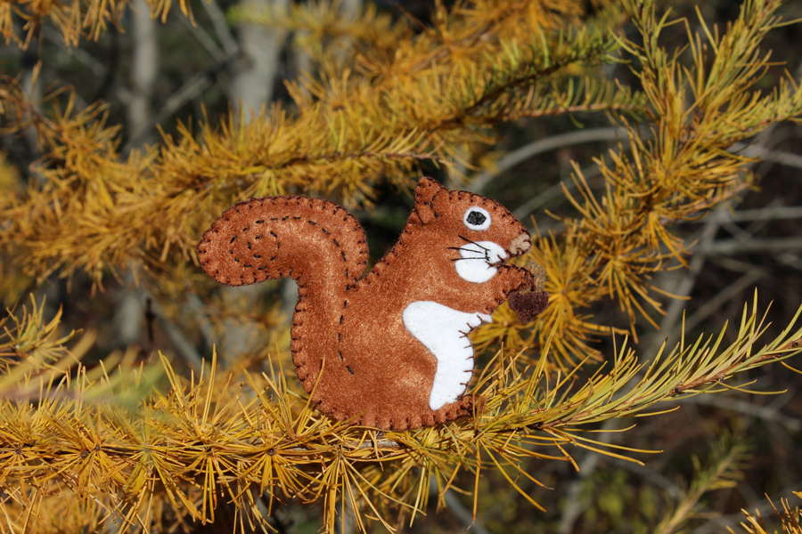The Entertaining Red Squirrel