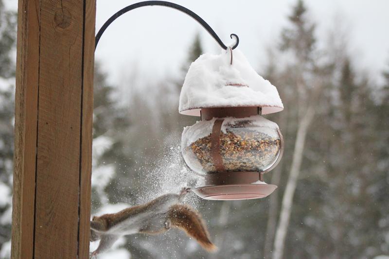 Bird Feeder vs. Squirrel