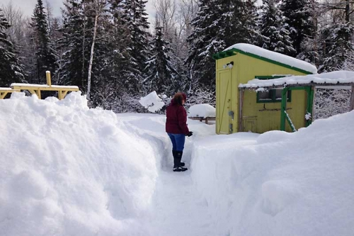 digging out the chicken coop after more snow