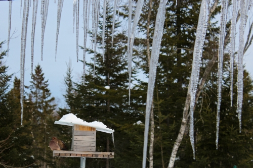 giant icicles hanging off porch in maine