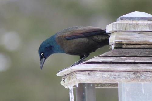 spring-birds-049