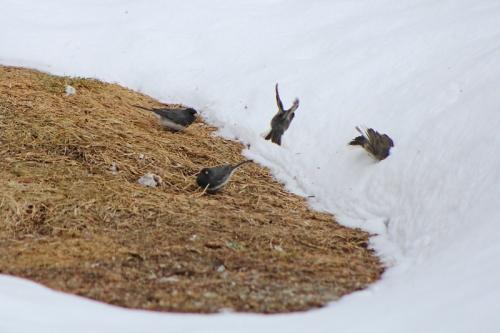 spring-birds-179