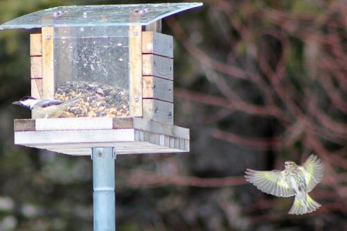 spring-birds-348