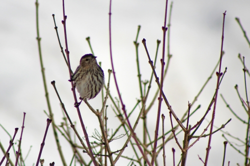 spring-birds-415
