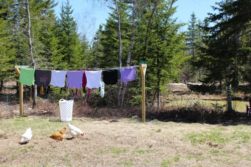clothes on the line