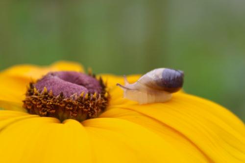 snail-038