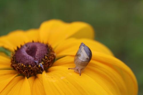 snail-071