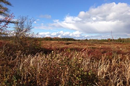 autumn on the corea heath