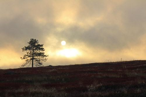 sunrise-solitary-tree