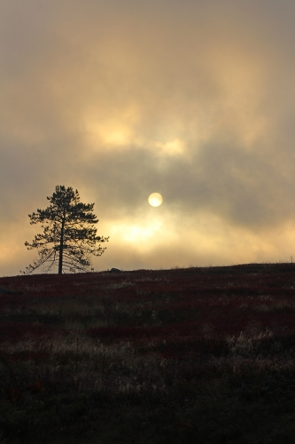 sunrise-tree