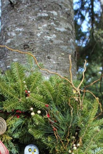 closeup-branches