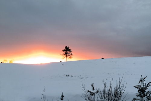sunrise-over-a-solitary-tree