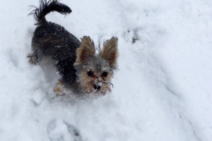 Gidget on a Snowy Day