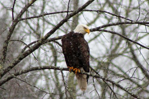eagle_3144