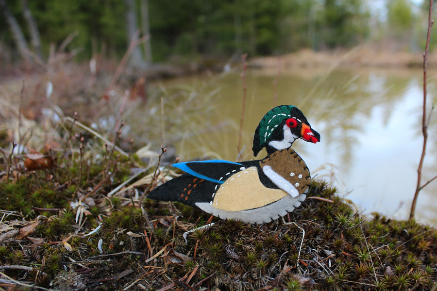The Winsome Wood Duck