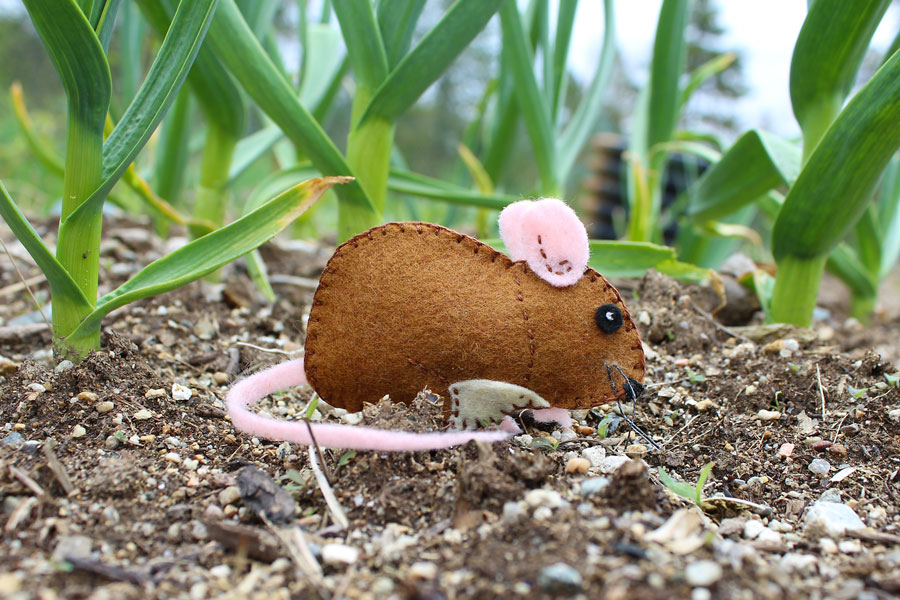The Gentle Garden Mouse