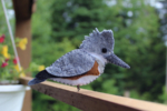 belted kingfisher pattery