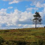 solitary-tree-web