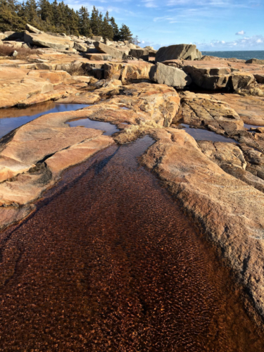 winter tidal pools at schoodic point