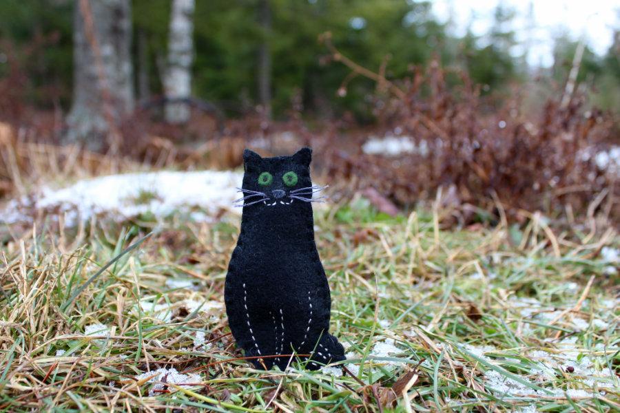 Downeast Thunder Farm Boo Kitty