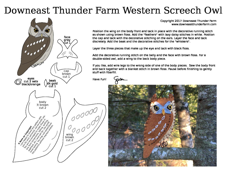 The Watchful Western Screech Owl