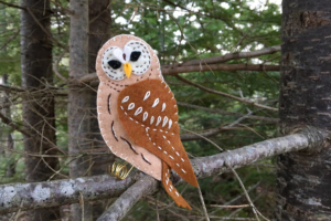woodland barred owl plan pdf