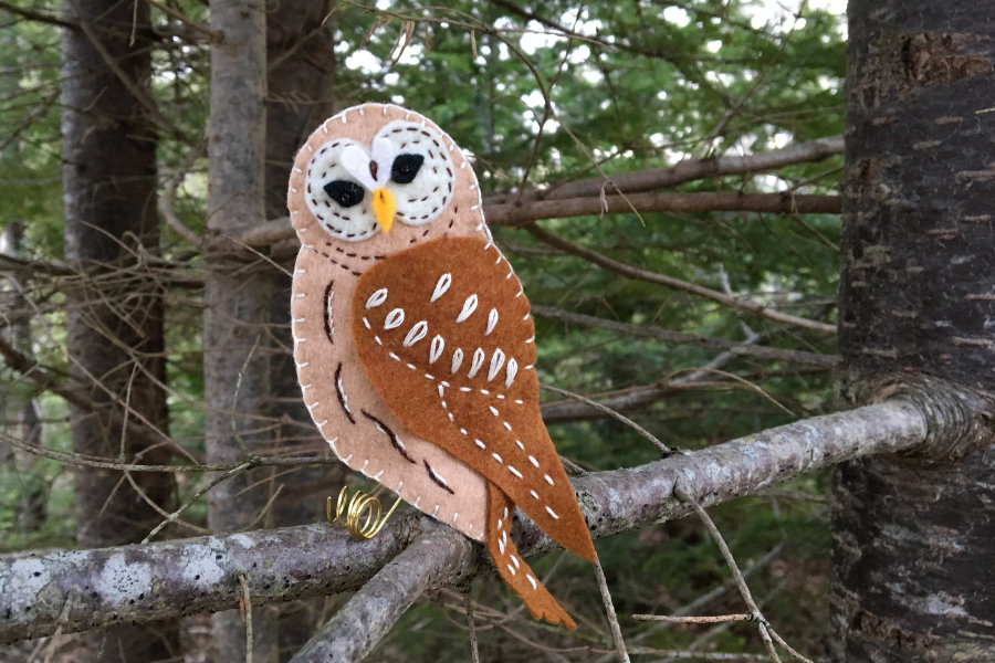 The Woodland Barred Owl