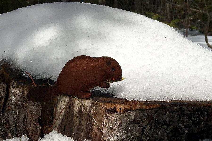 The Bodacious Beaver