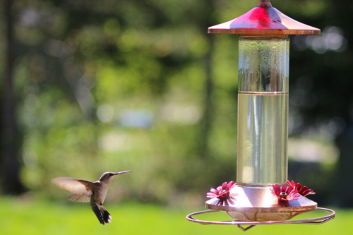 humming birds return for the season