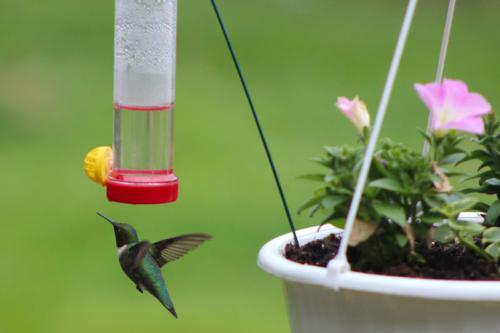 garden hummingbird feeder