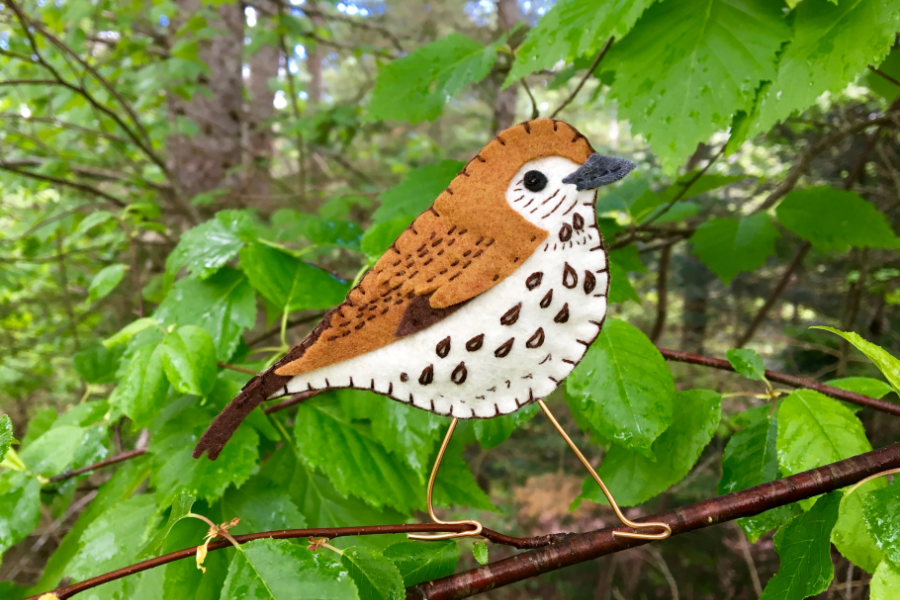 The Wonderful Wood Thrush