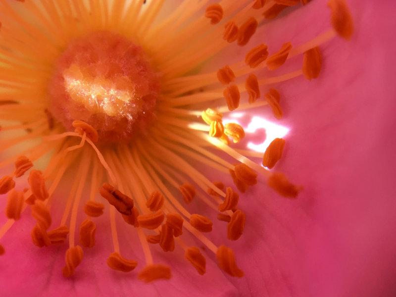 macro view inside a flower