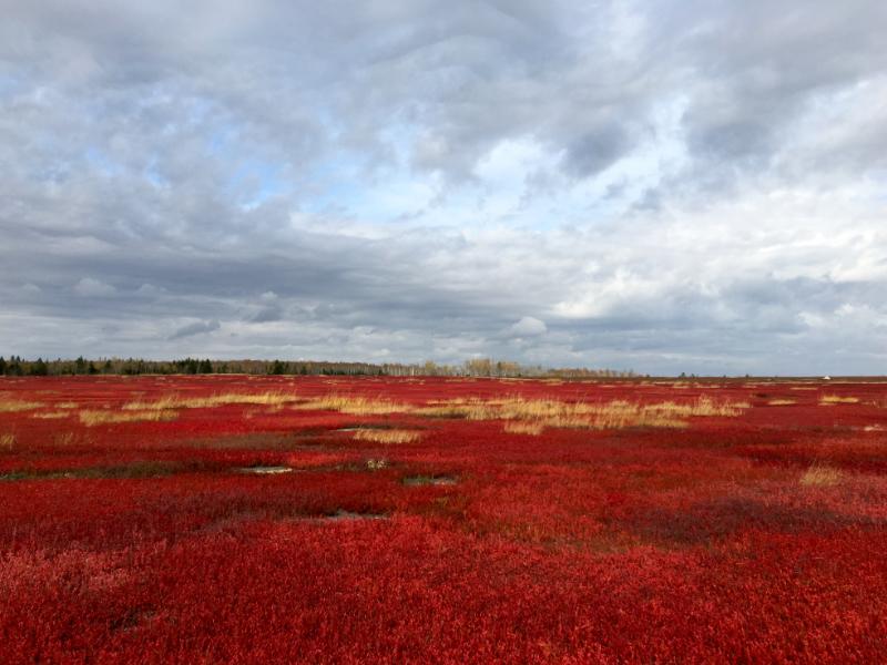 Garnet Fields