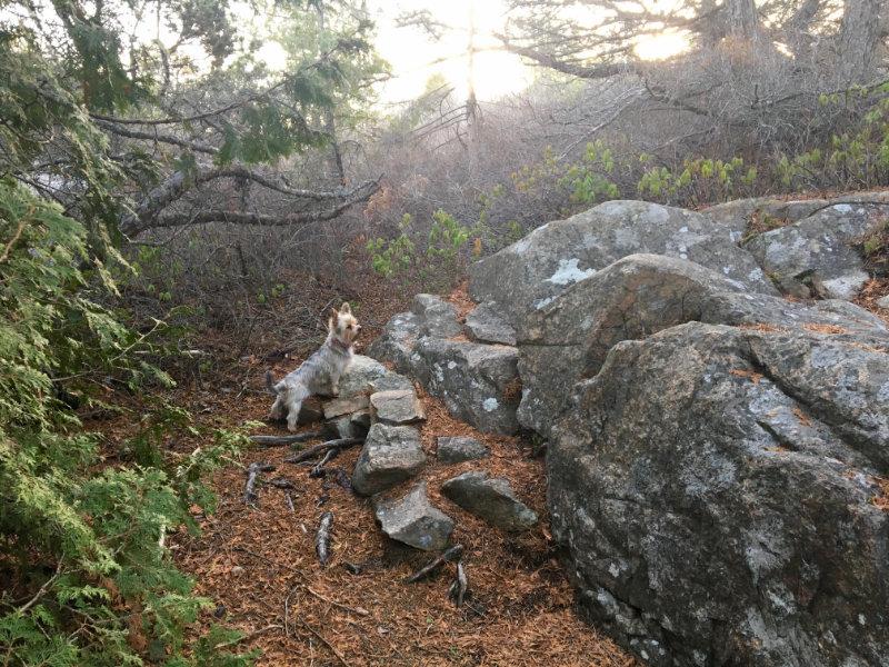 gidget on petit mana hike