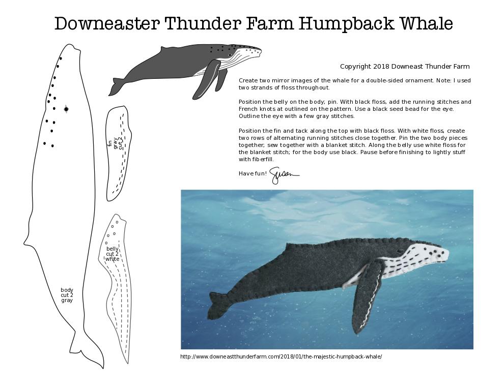 The Majestic Humpback Whale | Downeast Thunder Farm