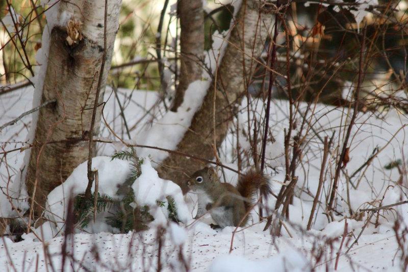 squirrel feeding at the base of a tree at Downeast Thunder Farm