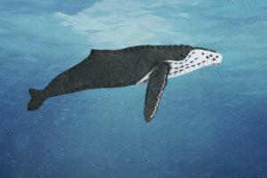 humpback whale felt pattern