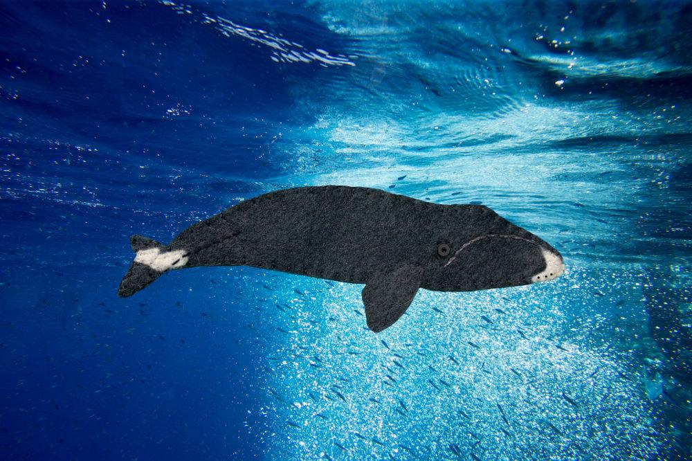 The Musical Bowhead Whale