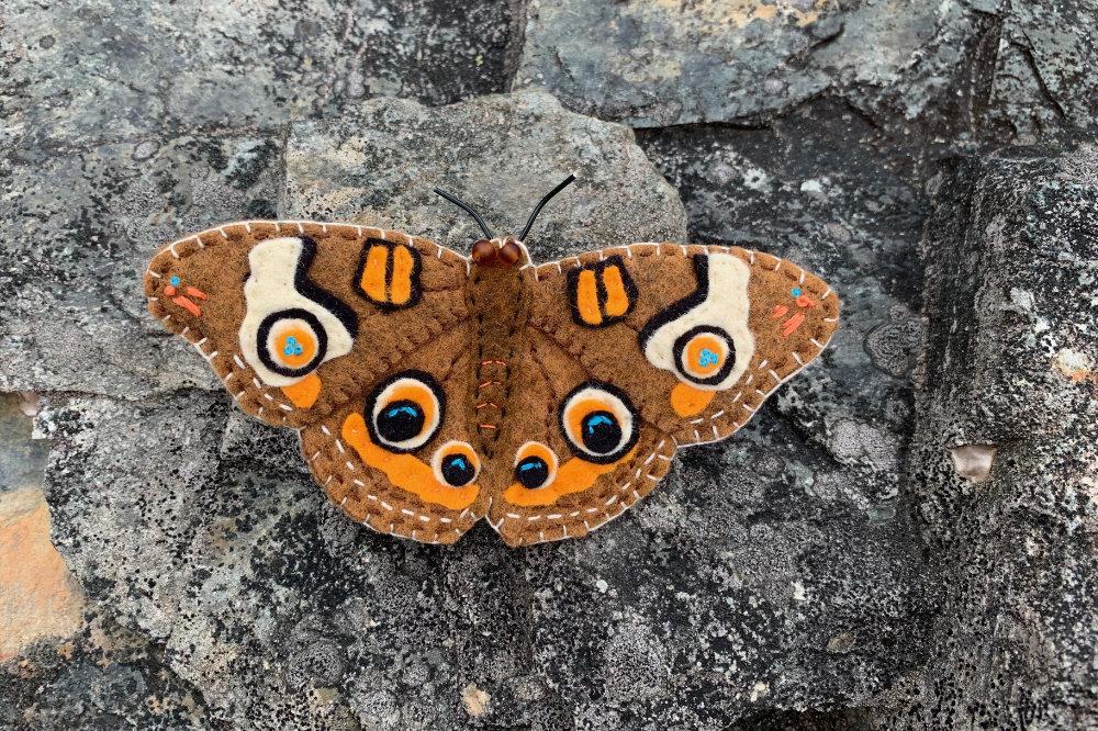 The Beautiful Buckeye Butterfly