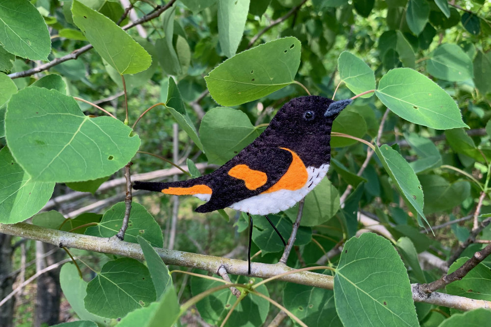 The Lively American Redstart
